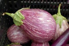 Purple Eggplant Royalty Free Stock Photography