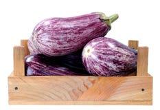 Purple eggplant Stock Photography