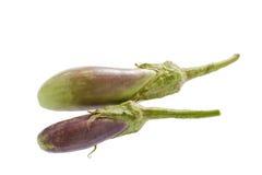 Purple eggplant isolated on white . Stock Photography
