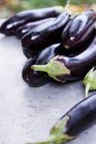 Purple eggplant Royalty Free Stock Photo