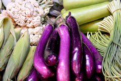 Purple eggplant and various vegetable. Fresh vegetable, cabbage broccoli and eggplant for maketing sales, shown as objective in intersting color and shape, raw Stock Image