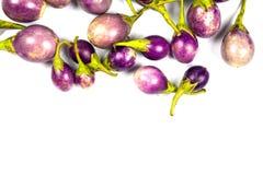 Purple eggplant on white background Stock Image