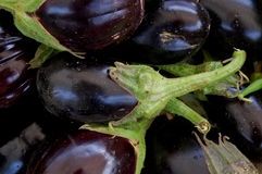Purple Eggplants Royalty Free Stock Images