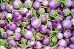 Purple eggplants Stock Image