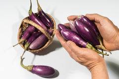 Purple Eggplants Royalty Free Stock Image