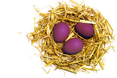 Purple eggs in a easter nest of straw isolated on white backgrou Stock Image