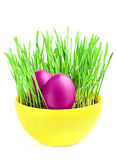 Purple eggs in green grass. Royalty Free Stock Photos