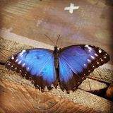Purple emperor butterfly Stock Photos