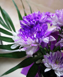 Purple exotic flowers Stock Photos