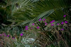 Purple Exotic Flowers with Palm Fronds. Jungle exotic color purple flowers clustered in front of large green palm fronds - Photographer: L. R. Styles stock image
