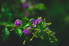 Purple Exotic Plant Stock Photography