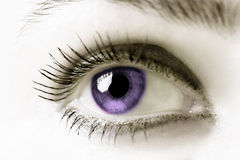 Purple Eye Royalty Free Stock Images