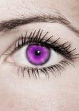 Purple Eye - Beautiful, Feminine Royalty Free Stock Image
