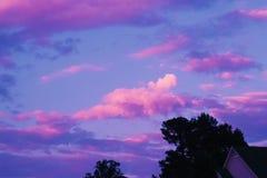 Purple in fall stock image