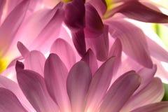 Purple Fantasia Stock Image