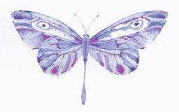 Purple fantasy butterfly. Watercolor painting of a purple fantasy butterfly Royalty Free Stock Image