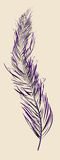 Purple feather Stock Photography