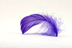Purple Feather 2 Stock Image