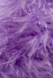Purple Feather Abstract Background Royalty Free Stock Photos