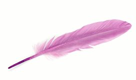 Purple feather over white Stock Photography