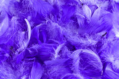 mauve feather background  Royalty Free Stock Images
