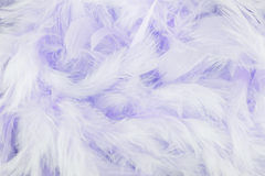 Purple feathers background Royalty Free Stock Photo