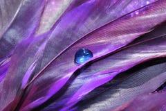 Purple Feathers stock image