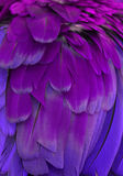 Purple Feathers Stock Photography
