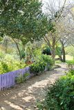 Purple Fence in a rose garden Royalty Free Stock Photography