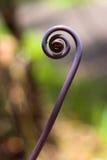 Purple fern shoot Stock Photo