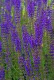 Purple field stock photo