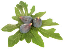 Purple fig. Ripe fresh purple fig fruits and leaf on white background Royalty Free Stock Images