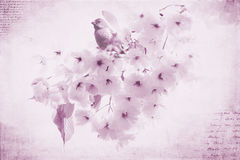 Purple Finch. A purple finch sitting on a cherry blossom tree. Rustic overlay added with pink and purple treatment Stock Photo