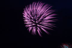 Purple Fireworks Bursting In A Black Sky Stock Photo