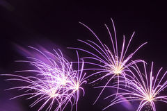 Purple fireworks. Wonderful violet shining stars on a black night background Stock Images