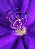 Purple flora Royalty Free Stock Photos