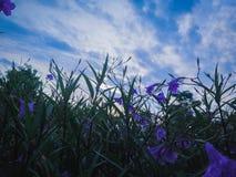 Purple Floral Dawn stock image