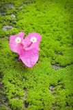 Purple flower. On green background Royalty Free Stock Photos