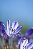 Purple flower. Natural background portrait Stock Photography