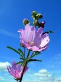 Purple flower. Against the blue sky stock image