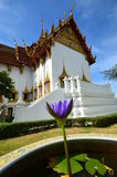 Purple flower. On the white background of a Buddhist temple with a golden roof and blue sky Stock Photo