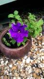 Purple flower. The purple flower Stock Image