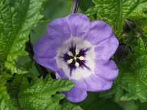 Purple flower. Surrounded with green royalty free stock photography