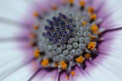 Purple Flower. Macro Shot of a purple flower Stock Photo