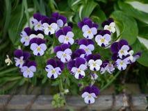 Purple flower. Along the street in Japan Stock Image