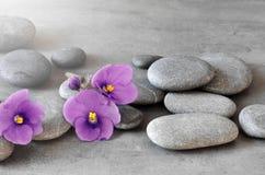 Free Purple Flower And Stone Zen Spa On Grey Background Stock Photos - 144516193