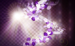Purple flower aroma. Elements with petals dancing, 3d illustration Royalty Free Stock Photos