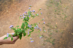 Purple Flower. Asian men was carrying Little purple flowers, and empty space for text Royalty Free Stock Photography
