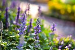 Purple flower on  background bokeh. Purple flower on green background Stock Images