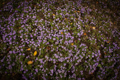 Purple flower background Stock Images